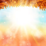 Abstract autumn poster with shining sun and blurred background. Stock Images