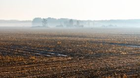 Abstract autumn rural landscape in the foggy morning.  royalty free stock images