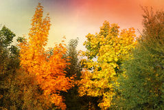 Autumn scenery background. Abstract multicolored autumn scenery background vector illustration