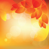 Abstract autumn sunny background with lights and leaves,. Illustration Royalty Free Stock Photos