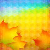 Abstract autumn vector bright background. With maple foliage Stock Photo