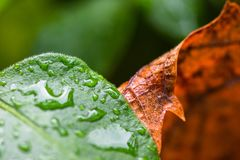 Abstract view of colorful leaves with rain droplets on them. Stock Image