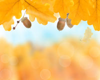 Abstract autumn yellow background Royalty Free Stock Image