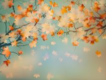 Free Abstract Autumn Yellow Leaves Background. EPS 10 Royalty Free Stock Image - 35774626