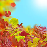 Abstract autumn. Yellow and red leaf on blue background Royalty Free Stock Photos