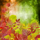 Abstract autumn. Yellow and red leaf on green background Stock Photography