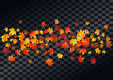 Abstract autumnal background with flying maple leaves. Fall . Abstract autumnal background with flying maple leaves. Fall season greeting card, poster, flyer vector illustration