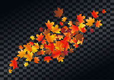 Abstract autumnal background with flying maple leaves. Fall . Abstract autumnal background with flying maple leaves. Fall season greeting card, poster, flyer Stock Photography