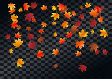 Abstract autumnal background with flying maple leaves. Fall . Abstract autumnal background with flying maple leaves. Fall season greeting card, poster, flyer Royalty Free Stock Images
