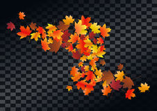 Abstract autumnal background with flying maple leaves. Fall . Abstract autumnal background with flying maple leaves. Fall season greeting card, poster, flyer Royalty Free Stock Photo