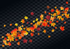 Abstract autumnal background with flying maple leaves. Fall . Royalty Free Stock Photos