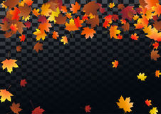Abstract autumnal background with flying maple leaves. Fall . Abstract autumnal background with flying maple leaves. Fall season greeting card, poster, flyer Royalty Free Stock Photography