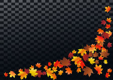 Abstract autumnal background with flying maple leaves. Fall . Abstract autumnal background with flying maple leaves. Fall season greeting card, poster, flyer Stock Images