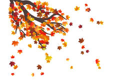 Abstract autumnal background with flying maple leaves. Fall season. Stock Photo