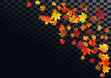 Abstract autumnal background with flying maple leaves. Fall . Stock Photography