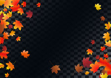 Abstract autumnal background with flying maple leaves. Fall . Royalty Free Stock Image