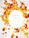 Abstract autumnal  background  with leaves. Abstract autumnal background with maple leaves. Place for text Stock Photo