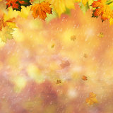 Abstract autumnal backgrounds. For your design Royalty Free Stock Photography