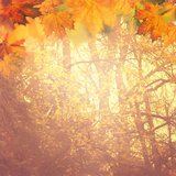 Abstract autumnal backgrounds Stock Photography