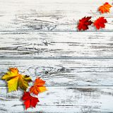 Abstract autumnal backgrounds. Fall maple leaves over vintage wooden desk royalty free stock images