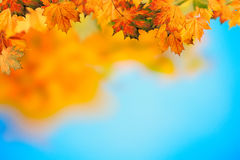 Abstract autumnal backgrounds. With beauty bokeh royalty free stock photography