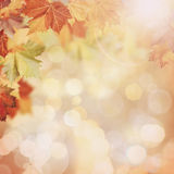 Abstract autumnal backgrounds Royalty Free Stock Images
