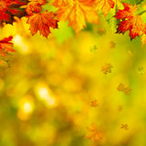 Abstract autumnal backgrounds Royalty Free Stock Photos