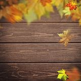 Abstract autumnal backgrounds. Fall maple leaves. Over vintage wooden desk royalty free stock photos