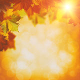 Abstract autumnal backgrounds. With maple foliage and beauty bokeh Stock Image
