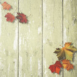 Abstract autumnal backgrounds Royalty Free Stock Photography