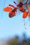 Abstract autumnal backgrounds wit foliage royalty free stock photos