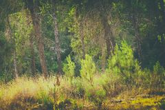 abstract autumnal dreamy image of forest at sunset light Stock Images