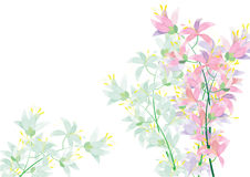 Abstract Azalea flowers on white background for background Stock Photos