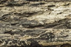 Texture of old wood jpg. Abstract,backdrop,background,black,brown,closeup,design,detail,grunge,material,natural,nature,old,old wood,pattern,rough,stone,structure stock image