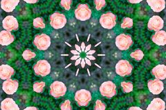 Abstract background. Kaleidoscope of flowers, isolated on a white background Stock Images