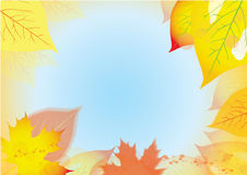 Abstract background. With autumn leaves and blue sky Royalty Free Stock Photo