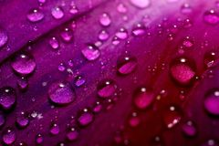 Abstract Background. Abstract violet background with drops of water Royalty Free Stock Photo