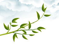 Abstract Background. Tree Branch with Green Leaves Vector Illustration