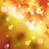 Abstract background. Abstract background in Autumn leaves Royalty Free Stock Image