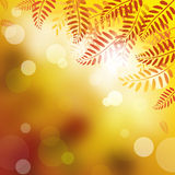Abstract background. Abstract background in Autumn leaves Stock Photography