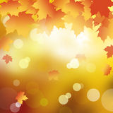 Abstract background. Abstract background in Autumn leaves Stock Image