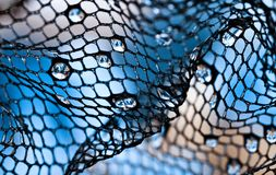Abstract background. Macro picture of water drops on blue background Royalty Free Stock Photography