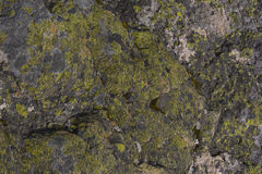 Abstract background of alpine lichens Royalty Free Stock Photography
