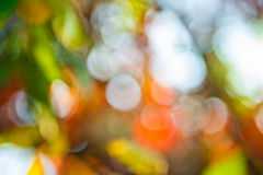 Autumn bokeh. Abstract background Stock Image