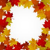 Abstract background with autumn colorful leaves. Vector royalty free illustration