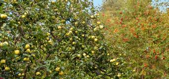 Abstract background. autumn fruits. Stock Photos