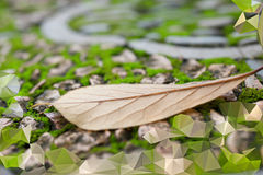 Abstract background with Autumn leaf on green moss between gray Royalty Free Stock Photos