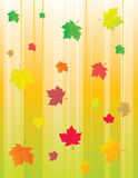 Abstract background with autumn leaves Royalty Free Stock Images