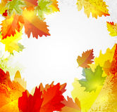 Abstract background with autumn leaves. Vector abstract background with autumn leaves royalty free illustration