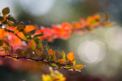 Abstract background of autumn leaves Stock Photos